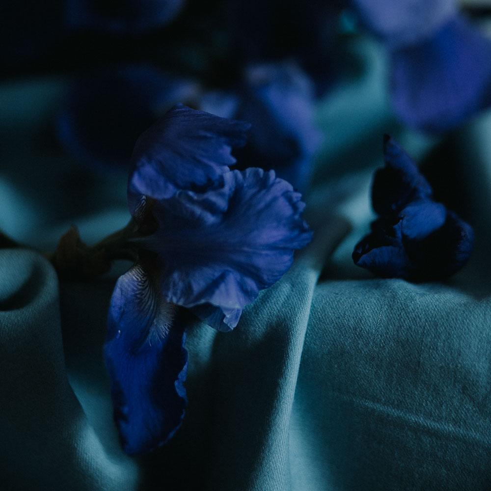 iris-bleu-jardin-loire-valley-1